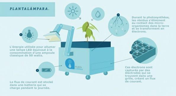 Perou ils produisent electricite grace a la seve des plantes (6)