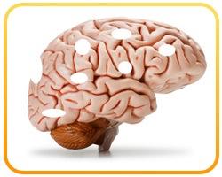 Le PIRE des aliments les plus nocifs pour votre cerveau