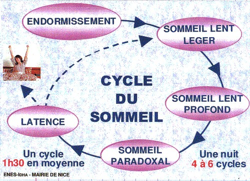 cycle-sommeil-graphique