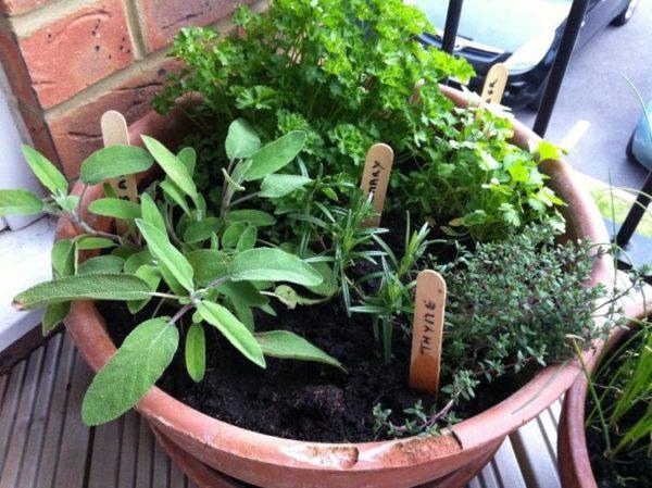 plantes-aromatiques-pot-sauge-thym-romarin-persil